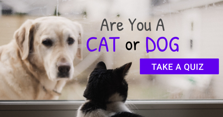 Are you a cat or a dog quiz