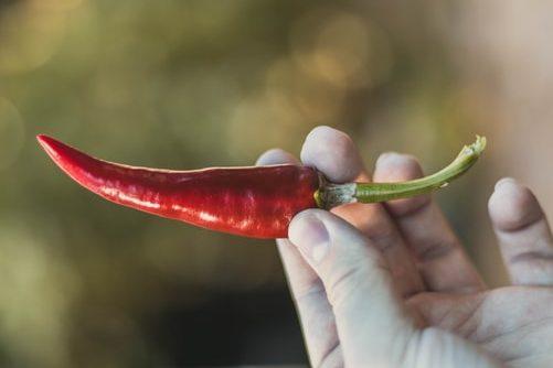 holding chilli